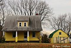 The Canary House (TravelsJ19) Tags: yellow canary house home resident maryland rock hall winter old sanctuary