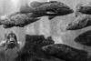 (willy vecchiato) Tags: fish aquarium aquarius blackandwhite biancoenero monochrome monocramatico painting grain old japan nagasaki glass window