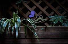 Umana_ironia (Danilo Mazzanti) Tags: danilo danilomazzanti mazzanti wwwdanilomazzantiit fotografia foto fotografo photos photography simpatia piante vaso componimento