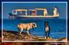 Marina canina (Canine Seascape) Gola del Pujol, València, l'Horta, Spain (Rafel Ferrandis) Tags: marina animals vaixell hdr eos7dmkii sigma150600contemporary
