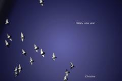 IMG_4674 (christinehag) Tags: doves birds new year sky oiseau colombes περιστέρια ειρήνη peace paix