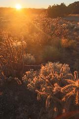 ([ raymond ]) Tags: americansouthwest desert landscape nature newmexico outdoors santafe sunset img9212 cactus cacti
