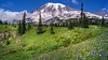 Eminence Domain (writing with light 2422 [not pro}) Tags: mountrainiernationalpark mountrainier volcano stratovolcano meadow flowers wildflowers landscape washingtonstate richborder sonya77 eminencedomain