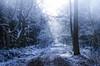 """ First snow Dreiländerwald "" (Kalbonsai) Tags: outdoorphotography dreiländerwald trees nikon d5100 1685mm snow light germany bos forest woud wald natur"