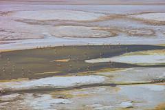 Brine bathers. (david takes photos) Tags: losflamencosnationalreserve reservanacionallosflamencos salardepujsa atacama chile flamingo flamingoes sanpedrodeatacama regióndeantofagasta x