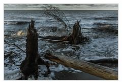 Nach dem Sturm (bavare51) Tags: ostsee dars weststrand baumstümpfe bäume strand landscape natur