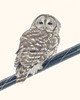 Barred Owl (jaybirding) Tags: animal bird leicavlux114 maine me nature outdoor stormer us
