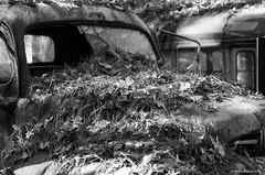 Old Car City on film (dpsager) Tags: bw dpsagerphotography f1n film ga georgia kodak oldcarcity tmax100 junkyard bwgallery