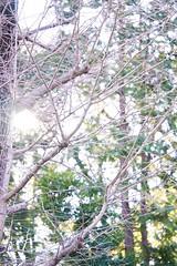DSC08772 (@saka) Tags: autoupload leaves 599602 flowers 43324338 trees 52 street 4751