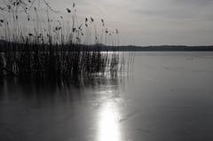 silenzio (Alberto Cameroni) Tags: lagodiannone gelo ghiaccio leica leicaxtyp113 poesia cesarepavese