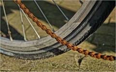 Chain (Hindrik S) Tags: cycle bicycle bike ketting keatling fyts fiets rad fytsketting fietsketting rusty rust ruost ruostich roestich corrosie corrosion wheel tsjil wiel tyre bân band street strjitte straatsteen strjitstien light ljocht licht shadow shade skaad sonyphotographing sony sonyalpha tamron tamron1750 tamronspaf1750mmf28xrdiiildasphericalif 1750 50mm a57 α57 slta57 2017