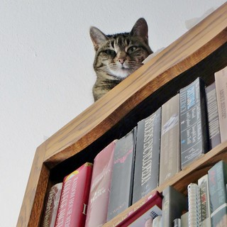 Natasha on the Bookcase