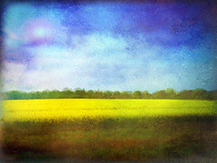 Fields of Yellow, Skies of Blue (virtually_supine) Tags: painterly photomanipulation landscape artistic textures layers impressionistic digitalmanipulation brightyellow fromatrain southoxfordshire rapeseedfields photoshopelements9 tmitexturallandscapes pcicasa3