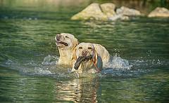 2 x Schwimmen