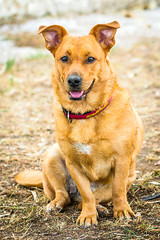 IMG_45887.jpg (Juan Mirón) Tags: fauna perros