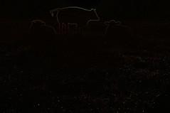 Variationen über Rinder beim Sonnenaufgang; Norderstapel, Stapelholm (10) (Chironius) Tags: tier morgendämmerung sonnenaufgang morgengrauen утро morgen morning dawn sunrise matin aube mattina alba ochtend dageraad zonsopgang рассвет восходсолнца amanecer morgens dämmerung diverse landwirtschaft rind