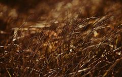 Feierabendgeräusch, Nr. 403943: Wind in der Novemberwiese (Manuela Salzinger) Tags: winter schwarzwald blackforest morgen morning wiese meadow sonnenaufgang sunrise