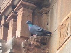 Ikkeri Aghoreshvara Temple Photography By Chinmaya M.Rao   (51)