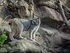 _TL60504 (5816OL) Tags: zoos dad zoo2016