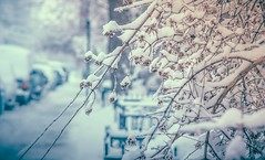 redoux (cébé céline) Tags: mileend montréal viedequartier hiver neige douce rue clôture arbre trottoir paysage profondeurdechamps voitures