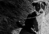 Forever Loyal (mikbanerjee) Tags: mik mikbanerjee meaningful blackwhite bw portrait animalphotography animal dogs pup puppy cute smile beautiful low key dark expressive emotion feeling light sunlight canon1300d canondslr canon canonrebelt6 cinematic cinemascope artistic pet pets dog 1855mm kit lens