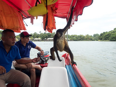 P8171115_LR (CharlieBro) Tags: 2016 centroamerica lagonicaragua lucy nicaragua agosto animal animale august barca boat lago lake lancha monkey natura nature scimmia summer wild