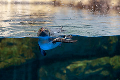 IMG_7891 (Jun.Ohashi) Tags: aquaparkshinagawa aquarium shinagawa アクアパーク品川 品川 水族館 港区 東京都 日本 jp canon キャノン eos eos6d tamronspaf2875mmf28xrdildasphericalifmacroa09 tamron タムロン sp 2875mm f28 di ld aspherical if macro a09