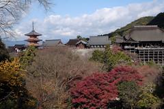 Autumn at the trace4@Kiyomizu, Kyoto (Amselchen) Tags: temple kiyomizudera kyoto japan season lateautumn earlywinter travel trees landscape fuji fujinon fujifilm fujifilmxseries xt2 fujixt2 xf35mmf14r panfocus