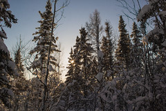 Millennium Trail (She Likes Odd) Tags: thompson manitoba canon60d canonphotography millenniumtrail nature winter snow boreal trail hiking trees shadows canonefs1855mmf3556is canonefs1855mm