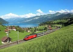 460 XXX,  Faulensee, 3 Aug 2016 (Mr Joseph Bloggs) Tags: faulensee interlaken basel intercity inter city ic982 460 train treno sbb ffs railway railroad spiez switzerland