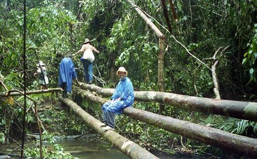 Deb takes a break on another tree bridge