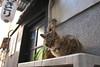 谷中のネコ (Tokutomi Masaki) Tags: 2017 東京 谷中 ネコ ねこ 猫 animal cat tokyo japan yanaka