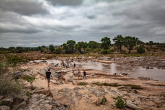 Panorama of the river inhabited by hippos in the Tsavo East National Park (http://shutterstock.com/g/vcarlotta) Tags: outdoor adventure viewfinder park national river travel animals adventurer kenya light africa people sun walk clouds crossing misty african blue panorama mountain savannah tourists sky car background water wild nature jeep masai eastern mara road safari landscape wildlife hipposriver redearth tsavoeast amboseli hippo hippopotamus