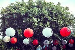its that year (igo.rs) Tags: china chinese lampion new year tree travel city urban
