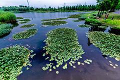 West Lake at Chen Shan Park (b56n22) Tags: china nikon shanghai east       1424 chenshan d810    wwwcsnbgshcn