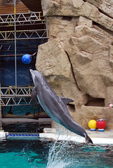 Delphin (Knarfs1) Tags: zoo dolphin duisburg delphin