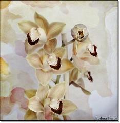 Sem titulo (Eudora Porto) Tags: portugal flor fantasia orqudeas texturas eudora tonalidades