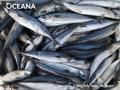 "Food to feed Tuna • <a style=""font-size:0.8em;"" href=""http://www.flickr.com/photos/134816585@N08/19093086834/"" target=""_blank"">View on Flickr</a>"