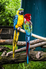 Zoom Erlebniswelt, Gelsenkirchen, Germany (Erna Delacroix) Tags: germany deutschland zoo colorful zoom parrot gelsenkirchen papagai erlebniswelt