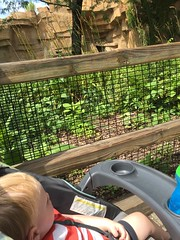 "Paul See a Bear at Brookfield Zoo • <a style=""font-size:0.8em;"" href=""http://www.flickr.com/photos/109120354@N07/19375662554/"" target=""_blank"">View on Flickr</a>"