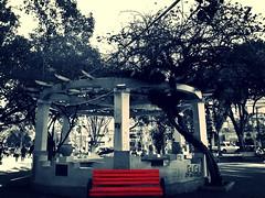 Praa Saldanha Marinho (roberta_souza91) Tags: street city red bw tree public brasil canon square day banco pb gazebo vermelho praa bandstand rvore pretoebranco riograndedosul banc canonpowershot coreto sx170is