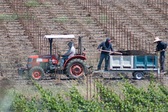 working the land #2 (mjwpix) Tags: tractor vineyard menatwork workingtheland canoneos70d canonfd300mmf56 michaeljohnwhite mjwpix