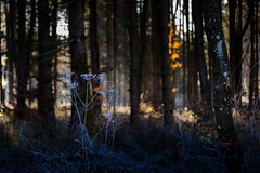 A Beauty in the Shadow (*Capture the Moment*) Tags: 2016 forest licht lichtstrahlen light lightbeam rayoflight sonnenstrahlen sonya7m2 sonya7mii sonya7mark2 sonya7ii sonyilce7m2 sonysel90m28g wald winter