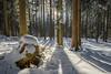 FOREST (F!o) Tags: marienstein waakirchen wald forest bäume schnee frost kälte cold winter snow frozen wildtiere trees bayern deutschland sunstar sonnenstern sonnenuntergang sunrise sunset