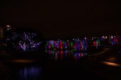 121016-30 (kara_muse) Tags: christmaslights vitruvianpark