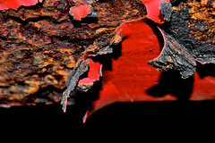 Red Paint and Rust (donjuanmon) Tags: macro macromondays hmm red rust paint oxide iron metal donjuanmon nikon itsapeeling abstract