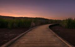 Boardwalk Empire (lizcaldwell72) Tags: boardwalk pathway sky hawkesbay newzealand sunrise pekapekaswamp light