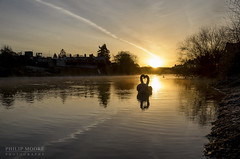Loving the Sunrise (Philip Moore Photography) Tags: sunrise swans river riversevern wildbird nature bewdley worcestershire wildlife love birds tranquil serene muteswan