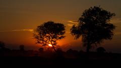 African Sunset (Thomas Retterath) Tags: 2016 africa afrika allrightsreserved animals botswana copyrightthomasretterath kwara natur nature okavangodelta sonnenuntergang sundown sunset thomasretterath tiere wildlife