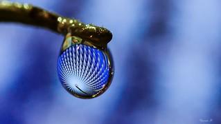 Goutte bleue,il pleut